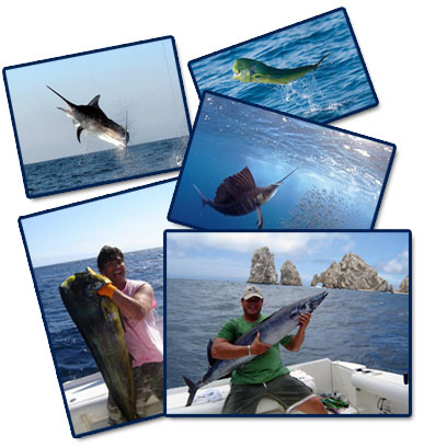 sea-fever-sportfishing